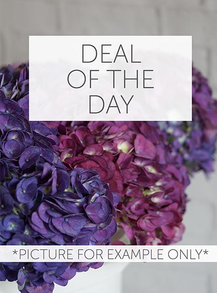RUSH DELIVERY: Deal of the Day in Arlington Heights IL, Sylvia's - Amlings Flowers