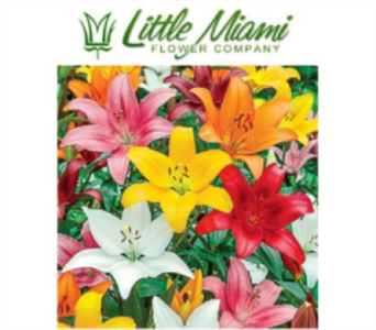 Little Miami Lily Bqt in Columbus OH, OSUFLOWERS .COM