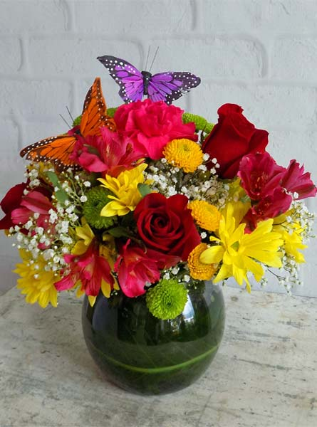 RUSH DELIVERY: Precious with Butterflies in Raleigh NC, Fallon's Flowers