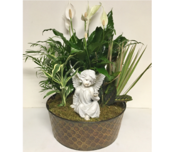 Gazing Angel in Living Plants-14 inch Planter in Wyoming MI, Wyoming Stuyvesant Floral