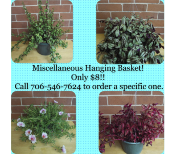 Miscellaneous Hanging Basket in Athens GA, Flowers, Inc.