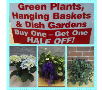 OWNERS SALE in Athens GA, Flowers, Inc.