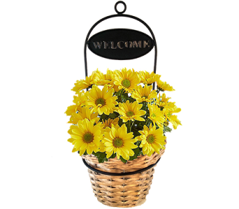 Welcoming Daisies in Birmingham AL, Norton's Florist