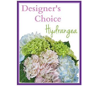 Designer's Choice - Hydrangea in South Hadley MA, Carey's Flowers, Inc.
