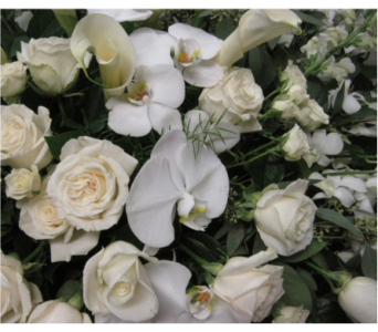 Designer's Choice White & Cream  in Richboro PA, Fireside Flowers