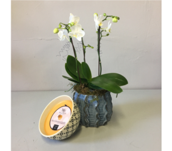 White Orchid   Candle in Walla Walla WA, Holly's Flower Boutique