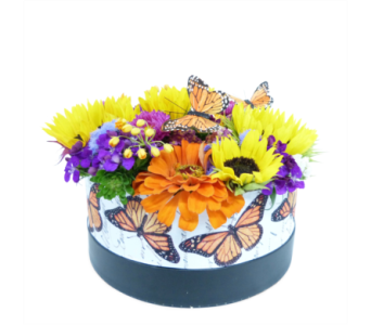 Butterfly Dreams in Silver Spring MD, Bell Flowers, Inc