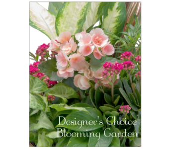 Blooming Garden Designer's Choice in Cary NC, Cary Florist