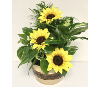 Sunflower Summer Planter - 3 Sizes Available in Wyoming MI, Wyoming Stuyvesant Floral