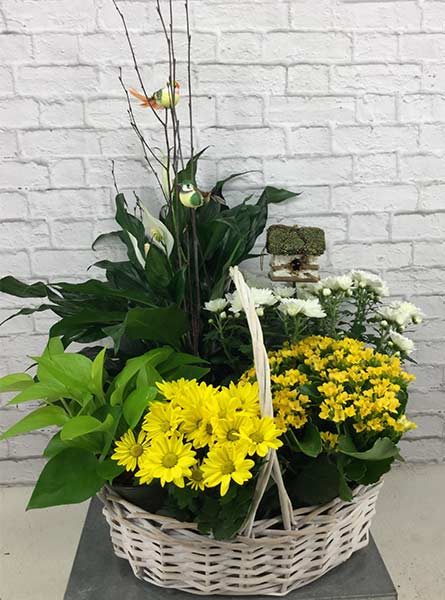 Yellow Planter in Arlington Heights IL, Sylvia's - Amlings Flowers
