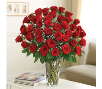 4 Dozen Premium Roses in Pittsburgh PA, Eiseltown Flowers & Gifts