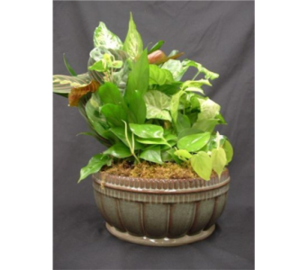Roman Style Live Plant Dish Garden in New Paltz NY, The Colonial Flower Shop