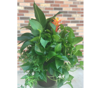 Large Planter with Bromiliad in Ogden UT, Lund Floral