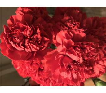 Red Carnation in Creedmoor NC, Gil-Man Florist Inc.