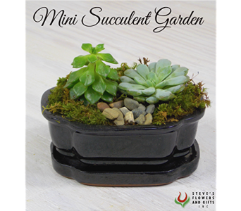 Mini Succulent Garden in Indianapolis IN, Steve's Flowers and Gifts