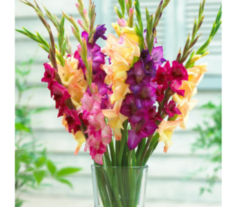 SALE! Buy 12 Gladiolus Get 6 FREE! in Baltimore MD, Raimondi's Flowers & Fruit Baskets