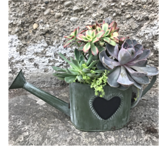 Watering Can Succulent Garden in Dayton OH, Furst The Florist & Greenhouses