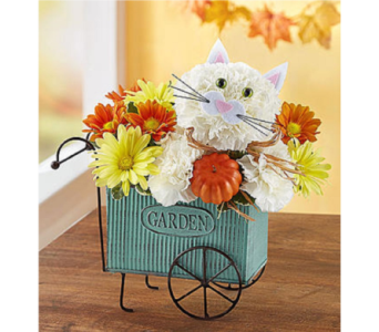 Fabulous Fall Feline in Huntington WV, Archer's Flowers and Gallery