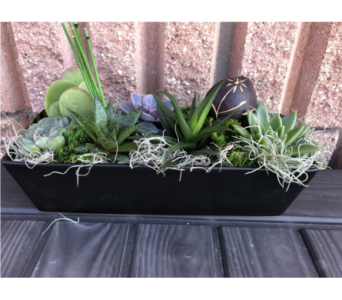 Rectangular Succulent Garden in Guelph ON, Patti's Flower Boutique