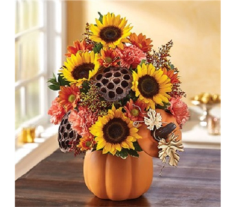 For My Pumpkin in Voorhees NJ, Green Lea Florist