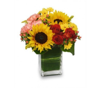 Season for Sunflowers in Princeton, Plainsboro, & Trenton NJ, Monday Morning Flower and Balloon Co.