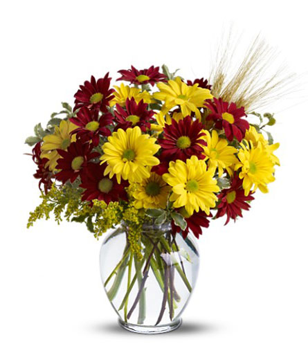 FALL FOR DAISIES- FREE Delivery in Cohasset MA, ExoticFlowers.biz