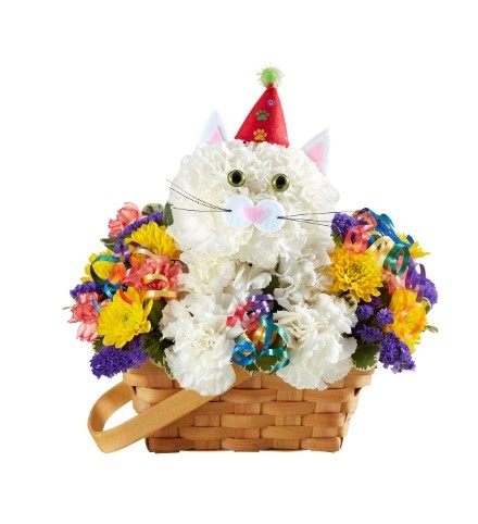 Purrfect Party Cat�  in Manchester MD, Main St Florist Of Manchester, LLC