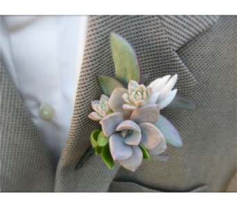 Strictly Succulents Boutonniere in Neenah WI, Sterling Gardens