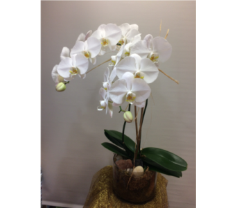 Fancy Phalaenopsis in Manhasset NY, Town & Country Flowers