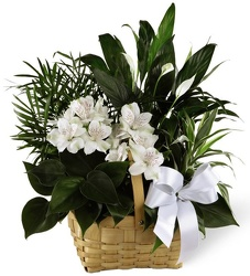Medium Sympathy Garden - FREE DELIVERY! in Cohasset MA, ExoticFlowers.biz