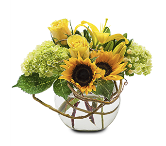 South Hadley Aristocrat in South Hadley MA, Carey's Flowers, Inc.