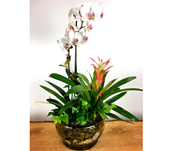 Elegant Orchids & More in Baltimore MD, Raimondi's Flowers & Fruit Baskets