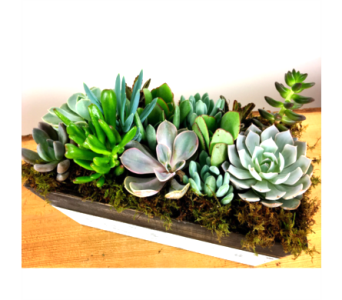 Box of Succulents in Baltimore MD, Raimondi's Flowers & Fruit Baskets
