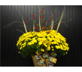 Fall Mum in Ionia MI, Sid's Flower Shop