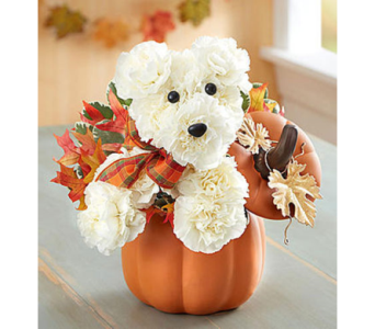 A Dog Able For Fall  in Fairfax VA, Exotica Florist, Inc.