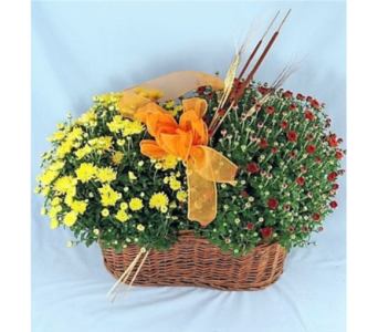 Double Mum Basket in Huntington WV, Archer's Flowers and Gallery