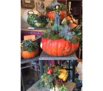Living Garden Pumpkin in Colonia NJ, Vintage and Nouveau