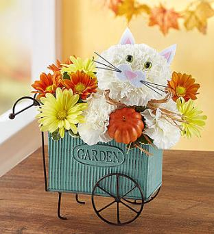 Fabulous Fall Feline in Camp Hill and Harrisburg PA, Pealers Flowers