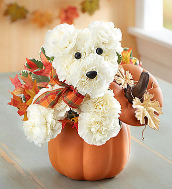 a-DOG-able for Fall in Camp Hill and Harrisburg PA, Pealers Flowers