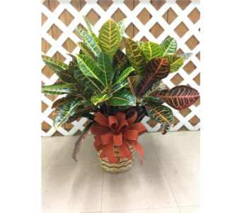 Croton in Purcellville VA, Purcellville Florist