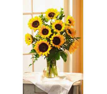 Yellow Sunflowers in Kennebunk ME, Blooms & Heirlooms ��