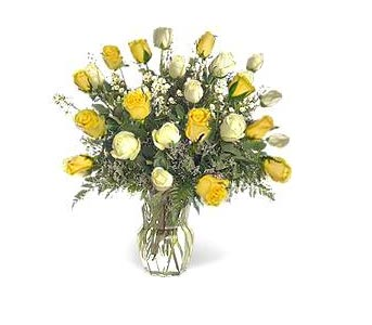 Stein Two Dozen White & Yellow in Burlington NJ, Stein Your Florist