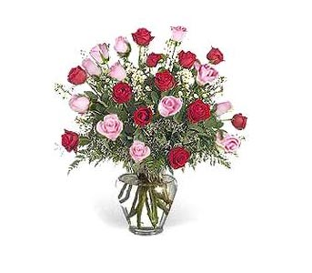 Stein Two Dozen Red & Pink Roses in Burlington NJ, Stein Your Florist