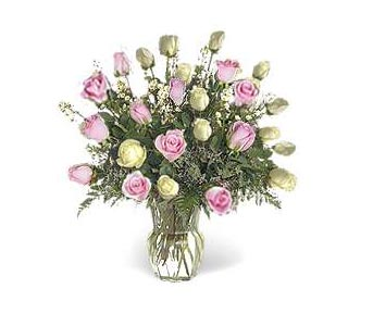 Stein Two Dozen Pink & White Roses in Burlington NJ, Stein Your Florist