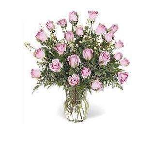Stein Two Dozen Pink Roses in Burlington NJ, Stein Your Florist