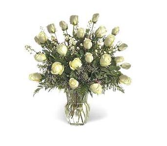Stein Two Dozen White Roses in Burlington NJ, Stein Your Florist