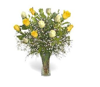 Stein Dozen White & Yellow Roses in Burlington NJ, Stein Your Florist