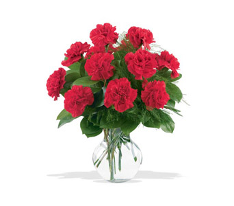 12 Red Carnations in Niagara Falls NY, Evergreen Floral