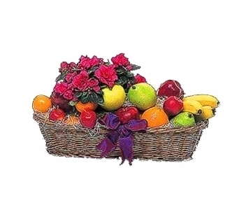 Plant and Fruit Basket in Seattle WA, Topper's European Floral Design