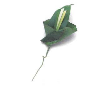 Boutonniere in Tuckahoe NJ, Enchanting Florist & Gift Shop